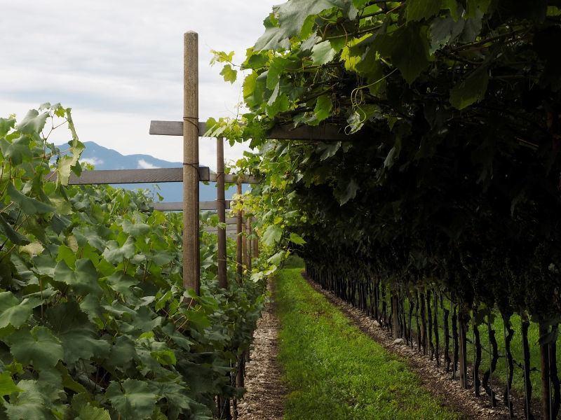 L'Alto Adige nel bicchiere 2018