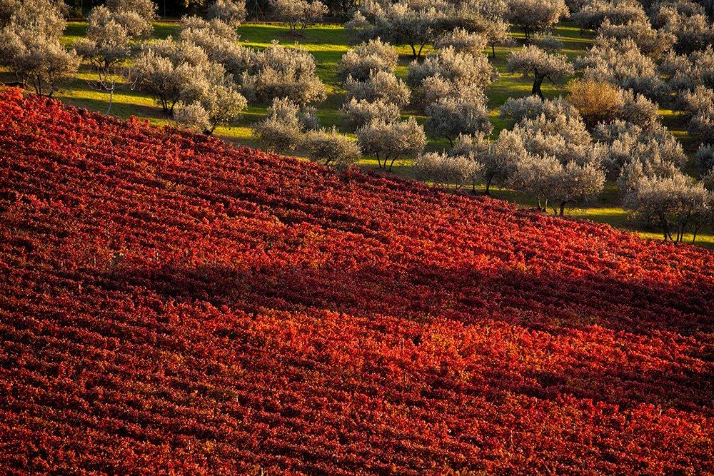 foliage in Umbria