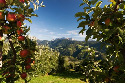 Cinque motivi per riscoprire l'Alto Adige-Südtirol