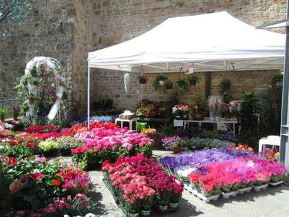Casole Fiorita e Il senso dei fiori per le api 2017