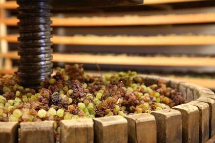 DiVinNosiola 2019 - quando il vino si fa santo