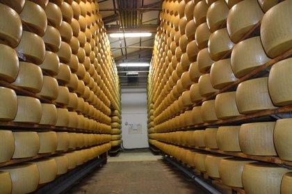 Viaggio nel Parmigiano Reggiano
