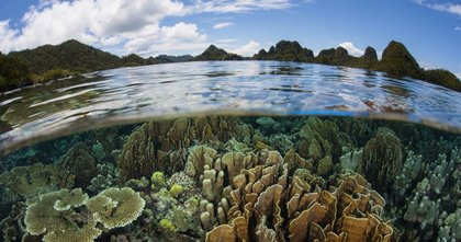 Giornata Mondiale dell'Ambiente: biodiversità per il nostro futuro