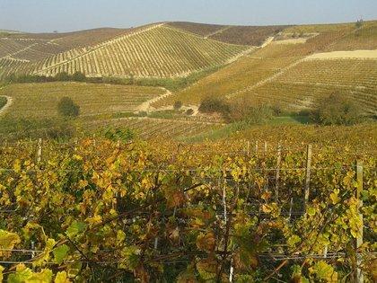 Le Langhe d'autunno: tra vino e tartufo