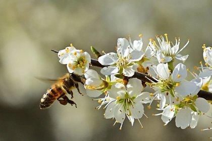 Bee Day: il 20 maggio si celebrano le Api