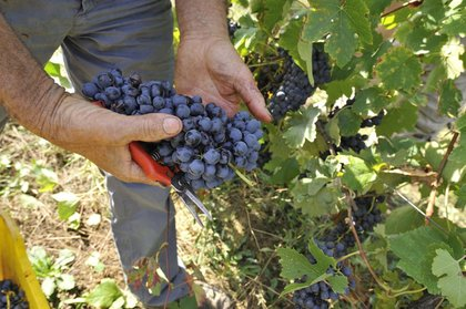 FIVI invita il Governo a vigilare sui dazi USA contro il vino italiano