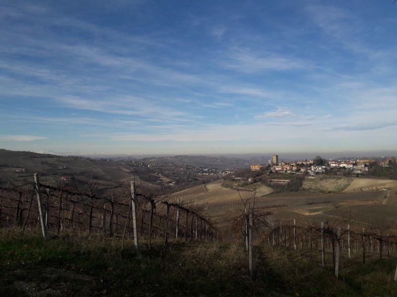 L'Anello del Pinot Nero 2019
