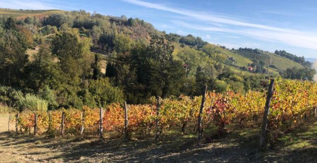 autunno in Monferrato