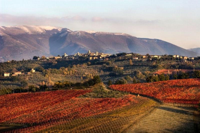 Foliage Umbria Sagrantino