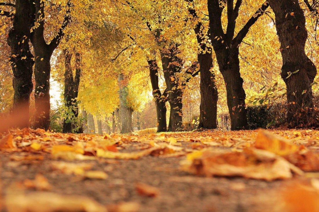 Autunno, è tempo di Foliage