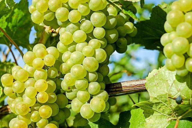 44^ Mostra del Torchiato e dei vini della Colli di Conegliano DOCG