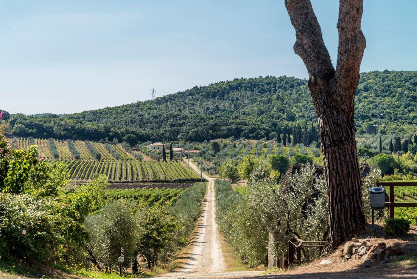 Bulichella Azienda Agricola Toscana