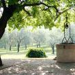 Cantine Aperte a San Martino alla Magia di Barbarano nei Colli Berici