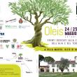 Olio e dintorni a Oleis di Manzano