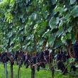 Giornate Altoatesine del Pinot Nero 2015