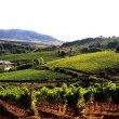 Cantine Aperte a San Martino: 10 e 11 Novembre nasce il vino, scoppia la festa
