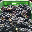 Degustazione di Vini Naturali dell'Azienda Casè a Milano